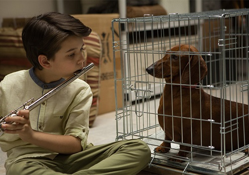 Wiener-Dog, photo courtesy of IFC Films.