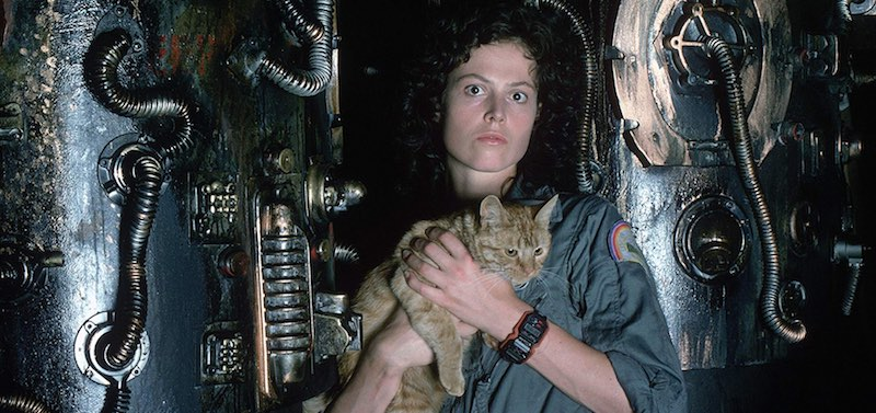Sigourney Weaver and the cat in Alien (1979)