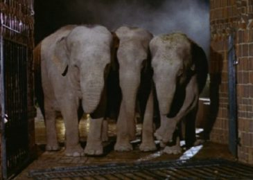 A scene from Wild Beasts.